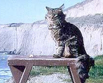 Robert the Cat  (photo taken by Adi Da)